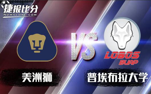 美洲狮vs罗伯士 美洲狮威风凛凛